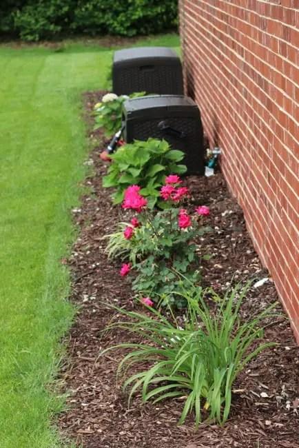 backyard plants patio