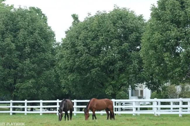 Fall Horses Danada House