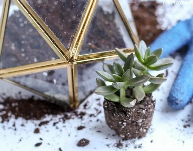 Planting-Terrarium