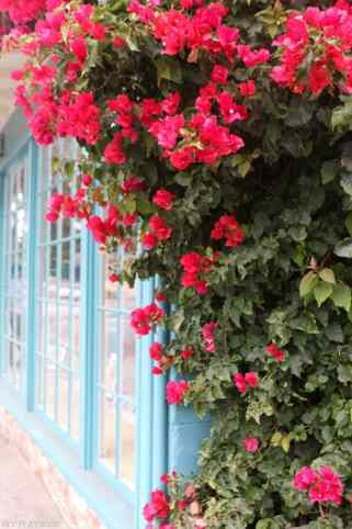 travel-carmel-flower-wall