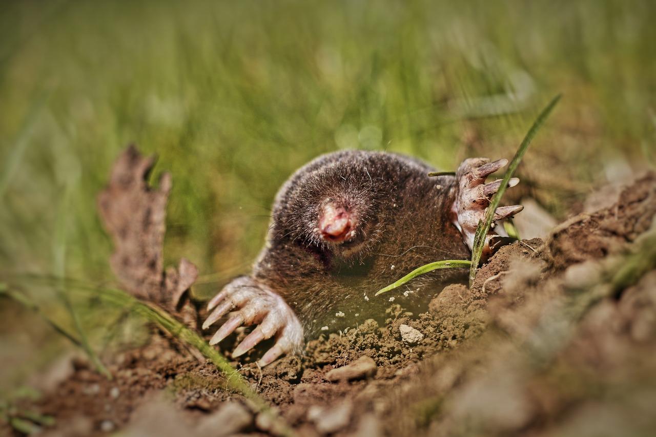 A mole and its molehill