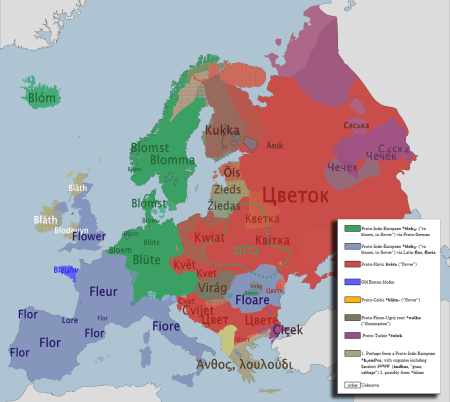 The word for flower in various European languages. Source: link