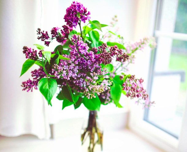 Picture of elderberry plant by a window