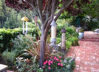 Birdfeeders on tree in our backyard 2048 x 1536