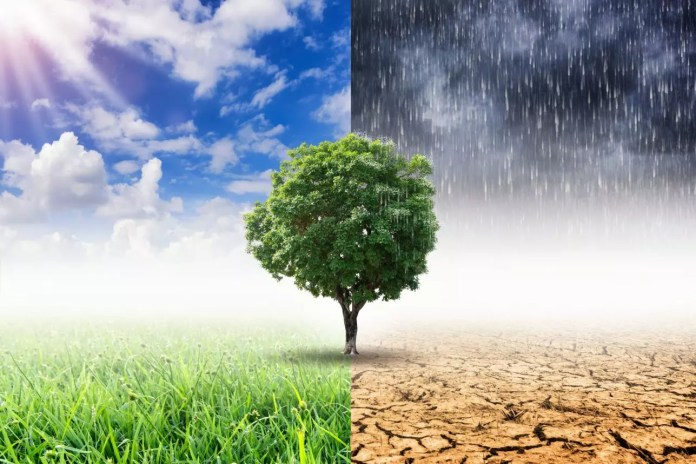 Rain and drought with tree 1287 x 858