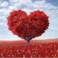 Red heart shaped tree in red field 1272 x 1206