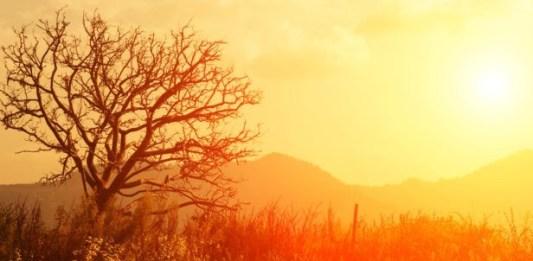 Mountain and tree yellow orange sky 616 x 482