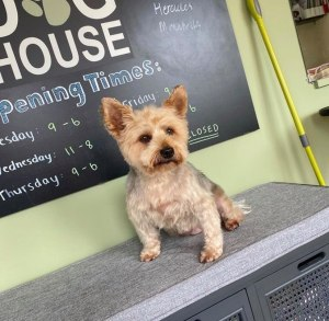 dog grooming customer