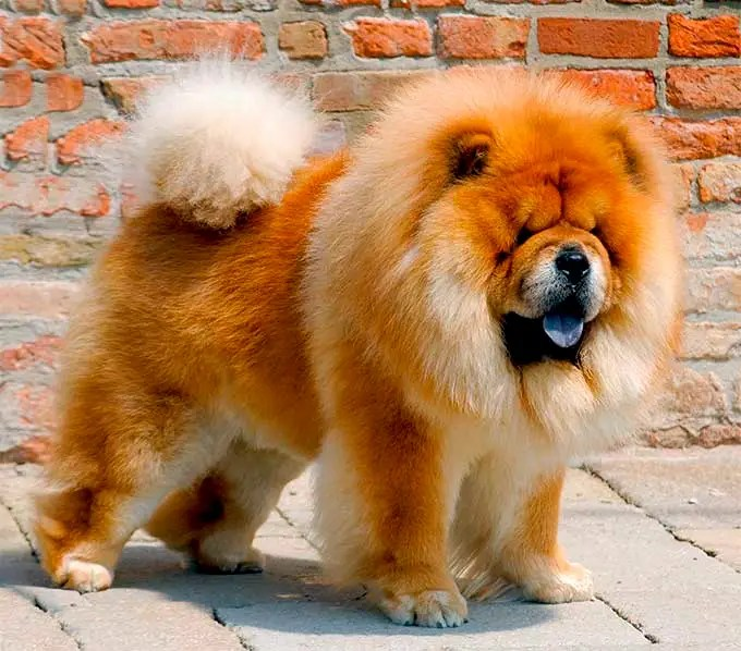 Dog Breed Names History The Dog And Cat House