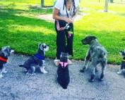 Dog Park Safety Tips