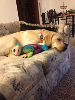 She loves to cuddle with her monkey