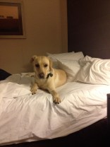 She wants her own bed at hotels...