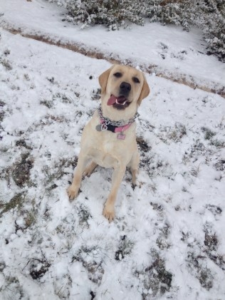 Good thing she likes the snow... we get plenty of it.