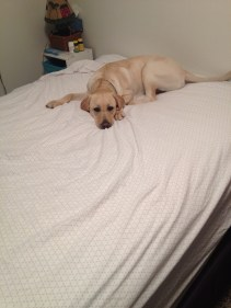 You dont need to make the bed...