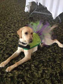 She was a little ham in her tutu at my friends Wedding