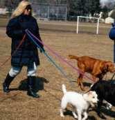 Theme reveal, #AtoZChallenge 2016 Canine Innkeeper