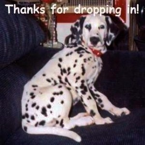"Tasha the Dalmatian says ""Thanks for dropping in!"""