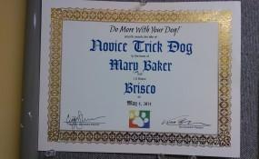 Boscoe the Trick Dog!