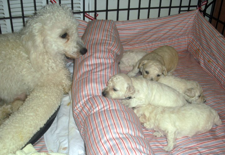 Maggie's Puppies Begin Their Adventure! ~ Adopted!