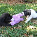 Hippity and Hoppity playing tug-o-war with the Easter Bunny