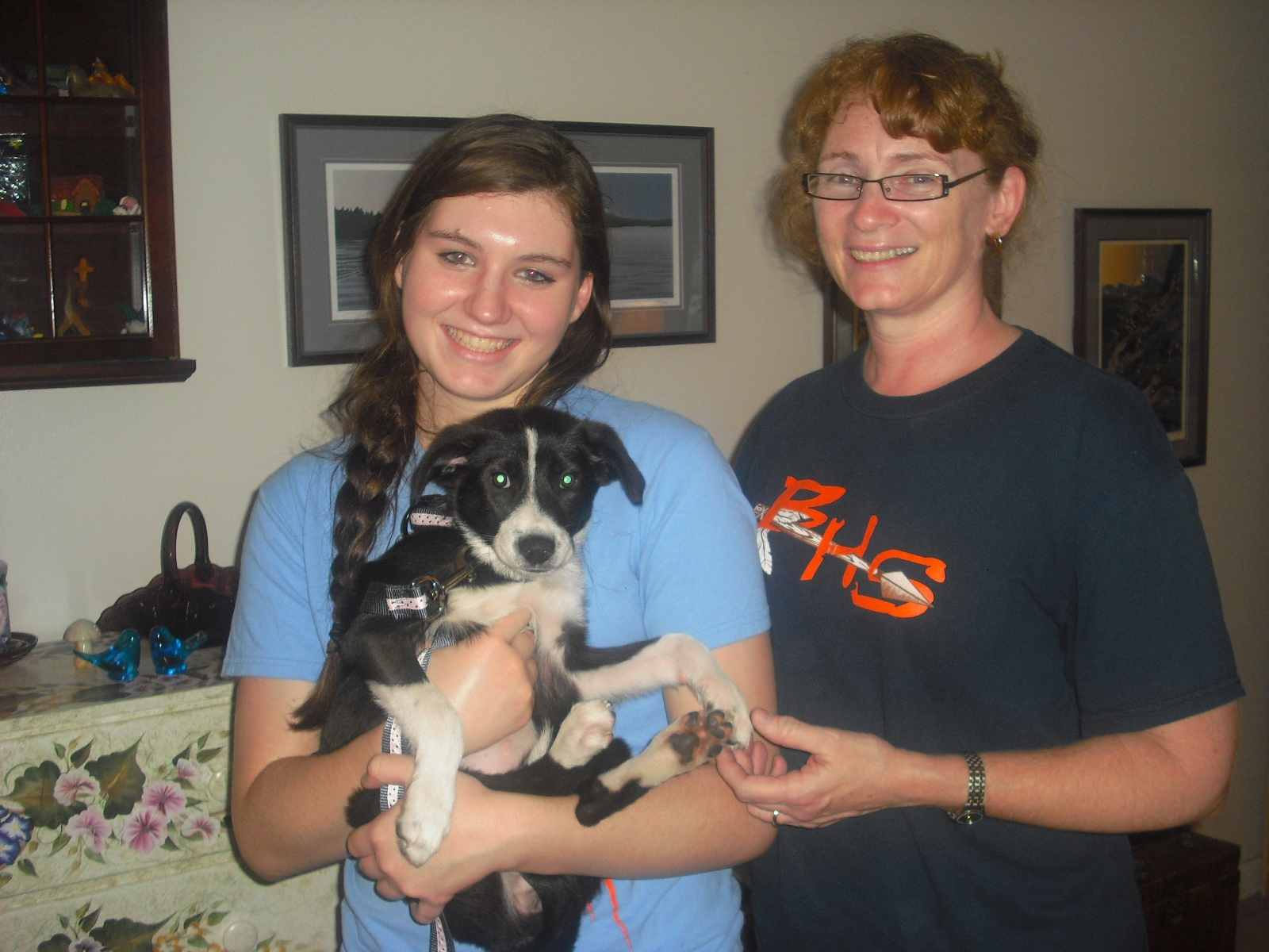 Fiddle the Border Collie Puppy ~ Adopted