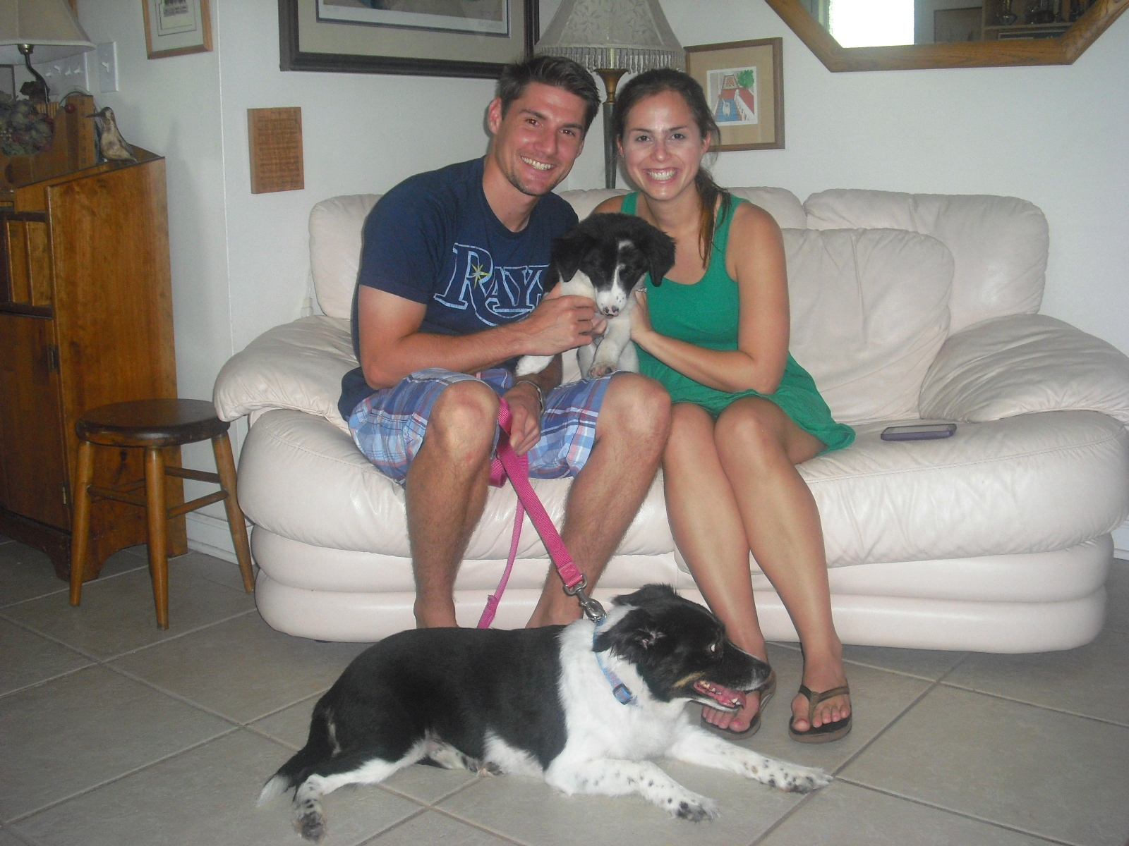 Polka Dot the Border Collie Puppy ~  Adopted