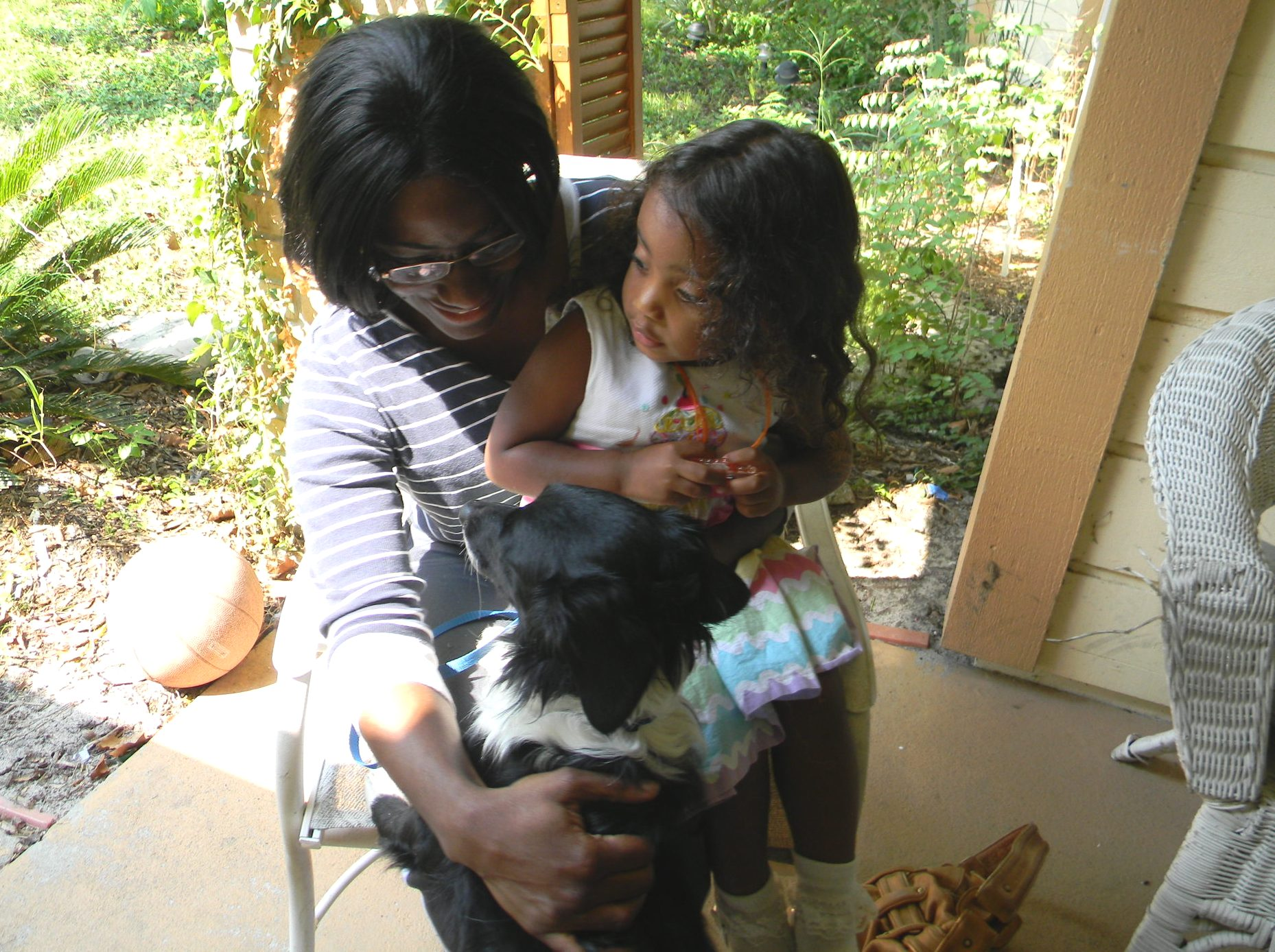 Tiny Dancer, the mini Border Collie ~ Adopted