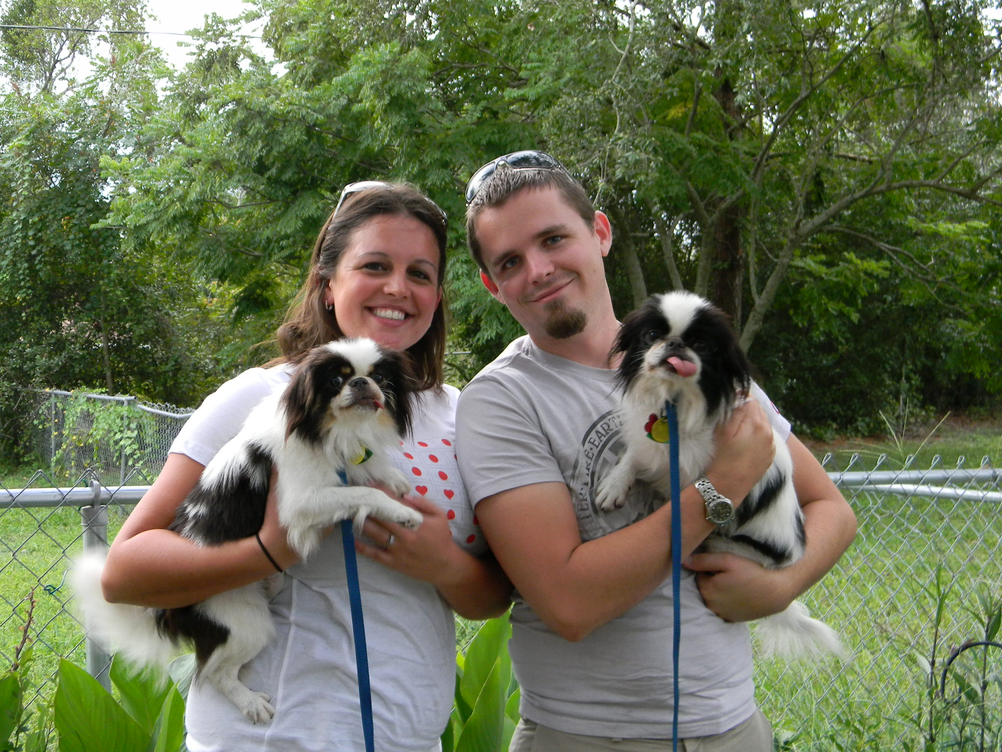 Suki, the Japanese Chin~Adopted