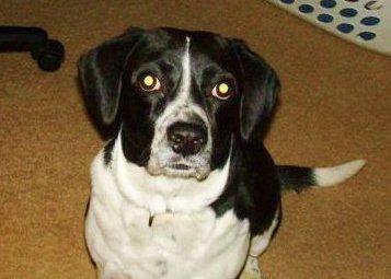 Saving Sparky the Beagle ~ Adopted