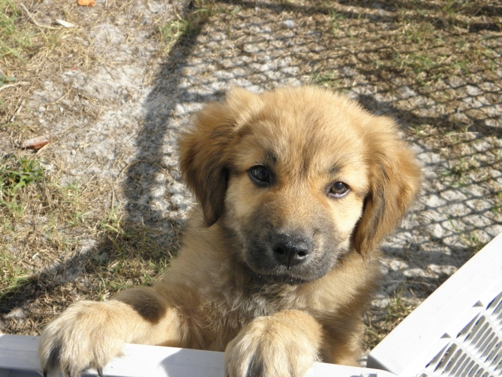 Stinking Cute Pippin Puppies~Adopted