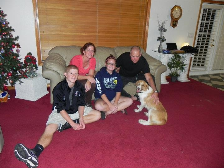 Ginger Snap – The English Shepherd Cuddlebug~Adopted