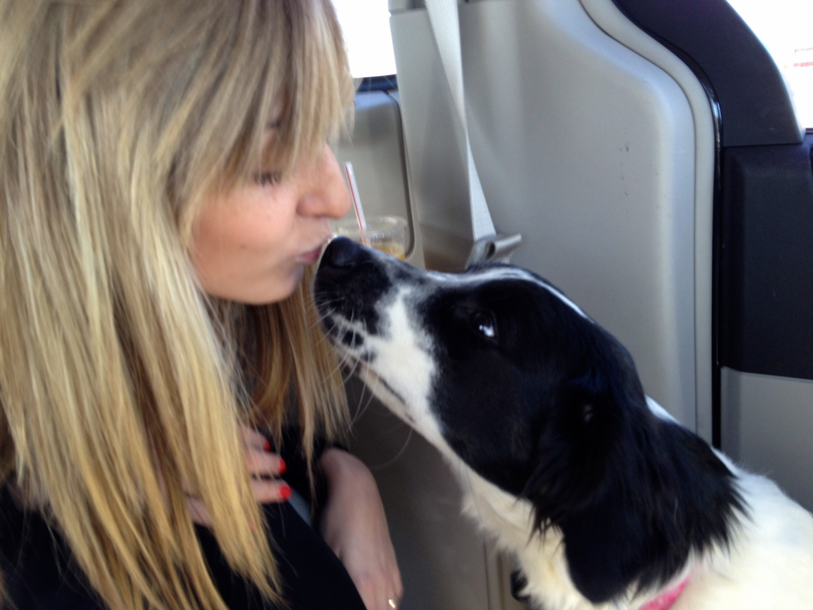 Mollie-Collie-Adopted!