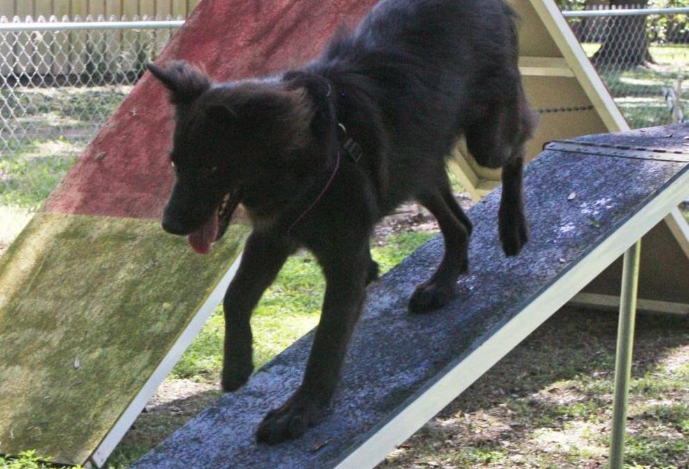 Onyx~Adopted
