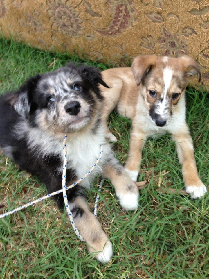Jen's Puppies