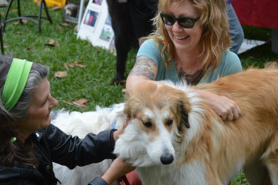 Toxic Drug Reactions in Collies