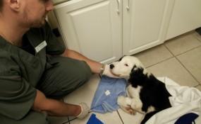 Matt of Newman DeLand with the Parvo Pup