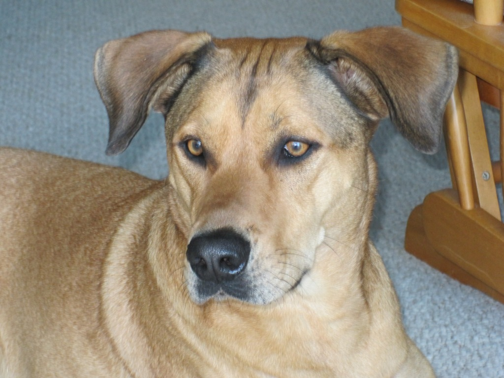 Dylan, a Purebred American Couch Dog~Adopted