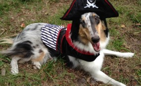 Freyja the pirate, with built-in eyepatch! Sent in by Jared