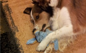 he loves his bunny!