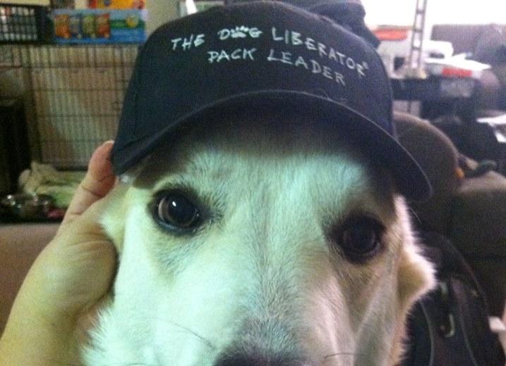TDL Hats