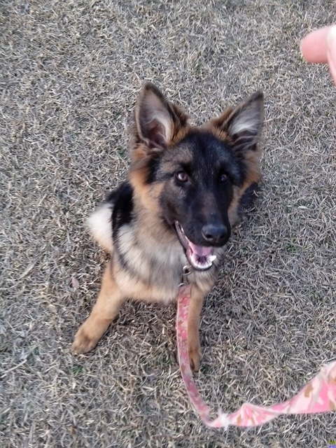 Heidi~Adopted