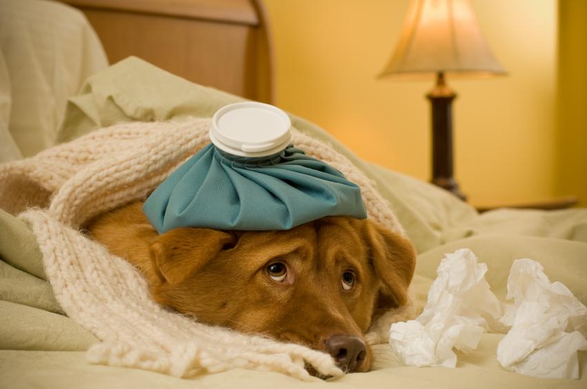 Caffeine Poisoning in Dogs