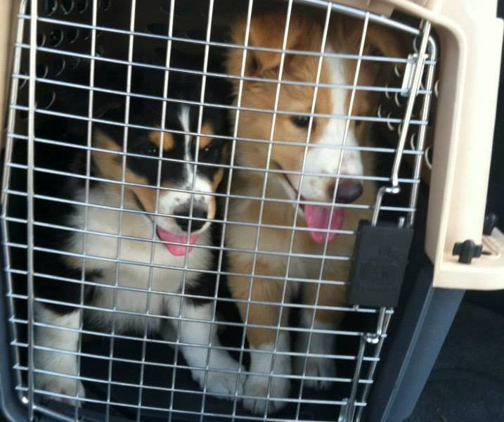 Are shelter pet transports to communities with kill shelters ethical?