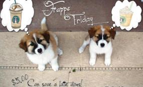 The Pippin Puppies ask YOU to Donate $5.00 on Frappe Friday!
