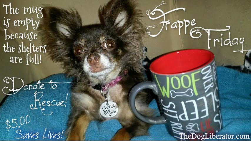 Frappaccino Fridays, Donate $5.00 and save a Latte Dogs!
