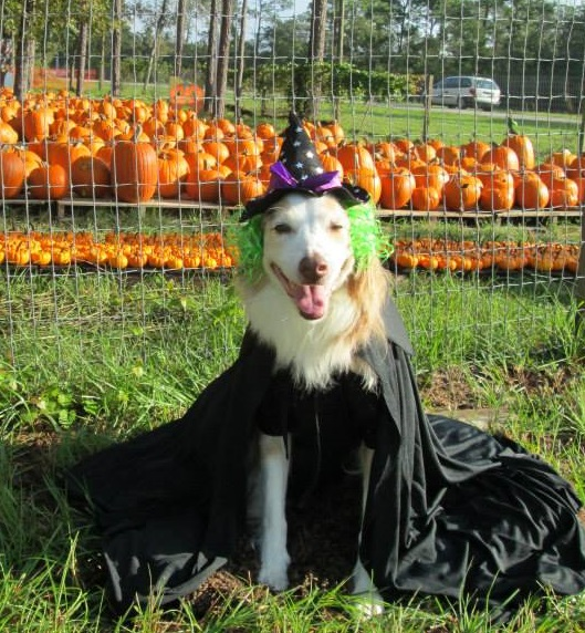 The TDL 10 Ways to Have a Safe and Happy Halloween