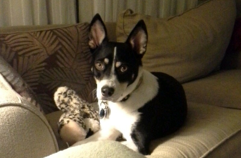 BuBi – Trained Alert Dog For Deaf Persons ~ Adopted!