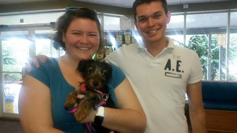 Yoo Hoo – the adorable Dorkie! – Adopted!
