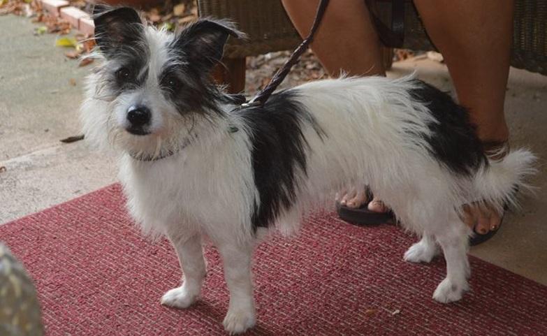 Tiana ~ Adopted!