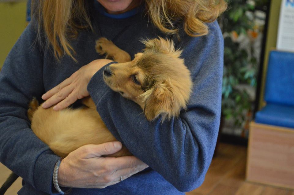 Little Ziggy ~ Adopted